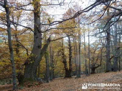 El Castañar de El Tiemblo,rutas trekking Ávila; canto cochino la pedriza